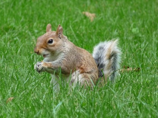 Squirrel-in-Central-Park-537x402